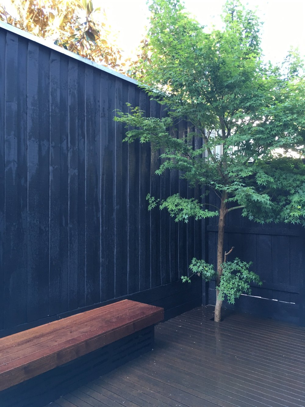 Elwood Courtyard. Merbau Decking. Japanese Maple.