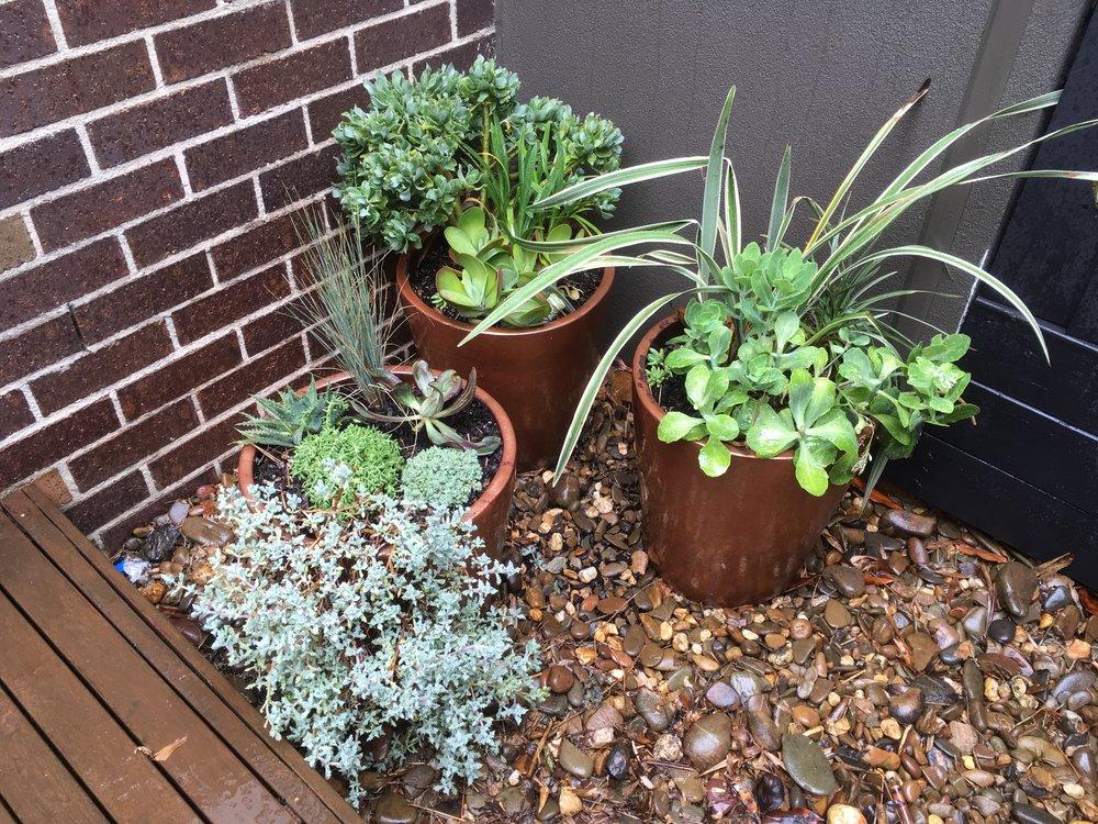 Elwood Courtyard. Merbau Decking. Succulent Pots.