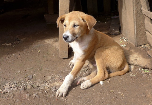 Puppies are everywhere in Burma.... it's a heartbreaking sight.