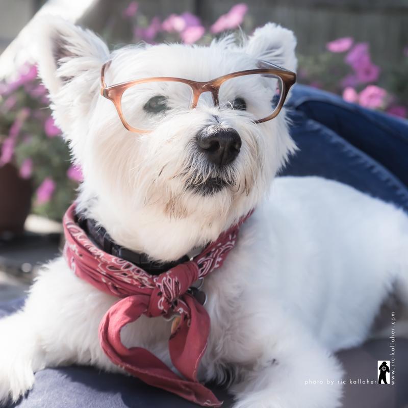 Professor Mackie