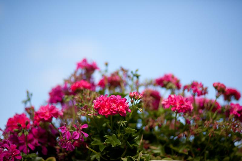 072913_jardin_du_luxembourg_068