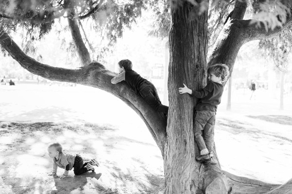 brothers playing together in tree
