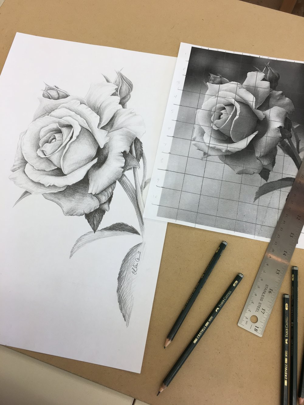 Rose Drawing for Tuesday