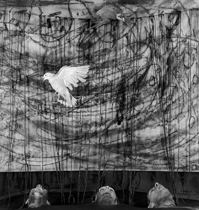 gaping [2010] photographed by SOME/THINGS contributor ROGER BALLEN to be featured in his upcoming book on the birds series