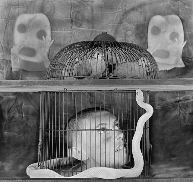 caged [2011] photographed by SOME/THINGS contributor ROGER BALLEN to be featured in his upcoming book on the birds series