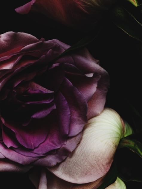 Rose_9435_40x603efe7e.png