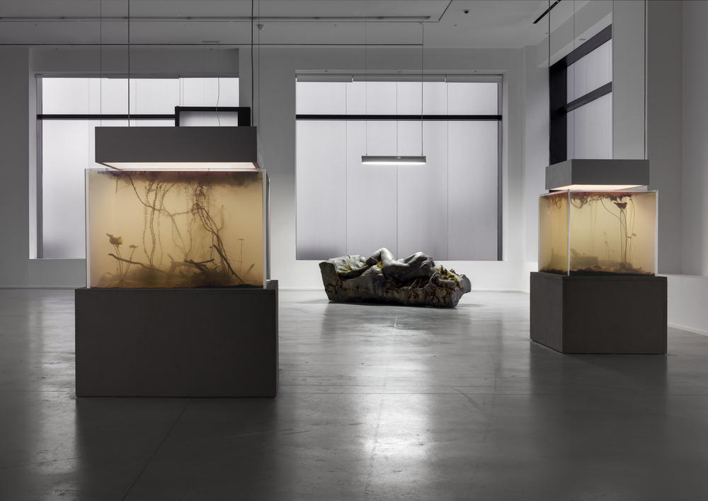 installation view, 'pierre huyghe. IN. BORDER. DEEP', hauser & wirth london, 2014 © pierre huyghe courtesy the artist and hauser & wirth, london. photography by alex delfanne