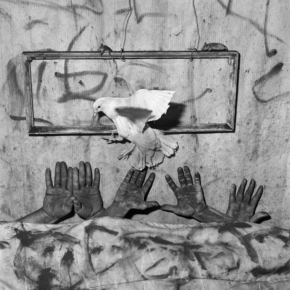 "Five hands. From the series ""Asylum of the Birds"" © Roger Ballen"