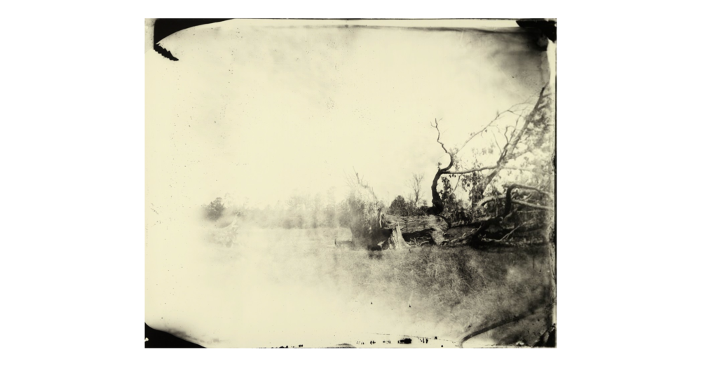 Sally Mann - Untitled  Deep South 6 - Karsten Greve Gallery