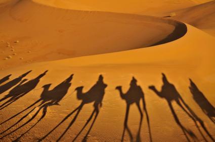 camels-desert