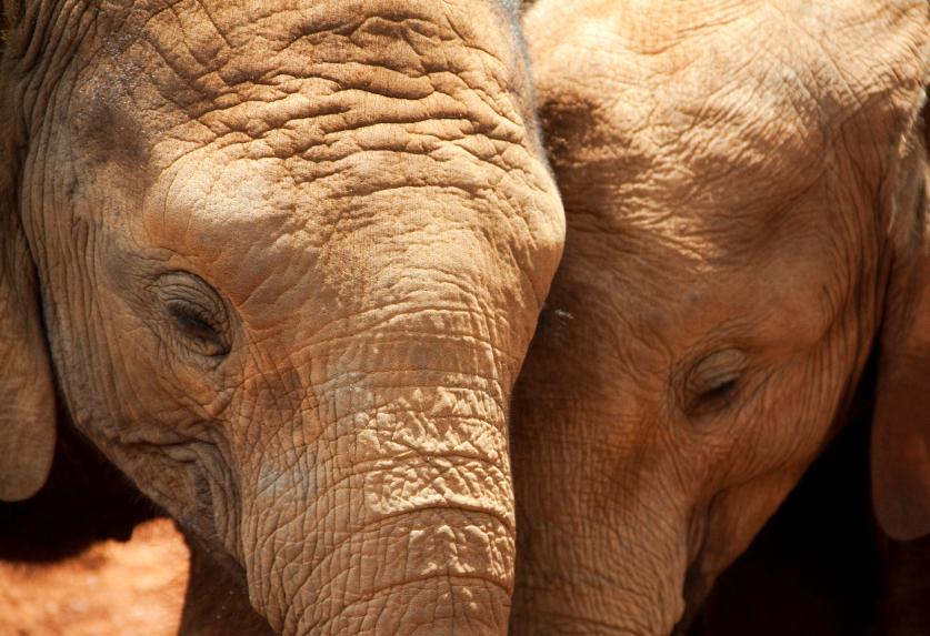 elephantshug