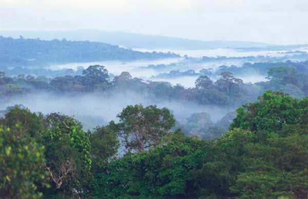 Rainforest South America