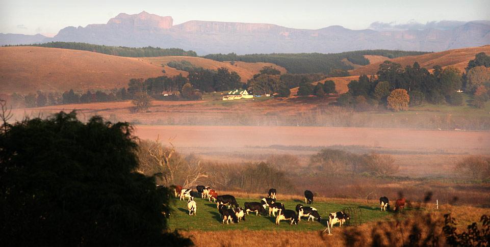spring-water-farm-vicinity-drakensberg.jpg