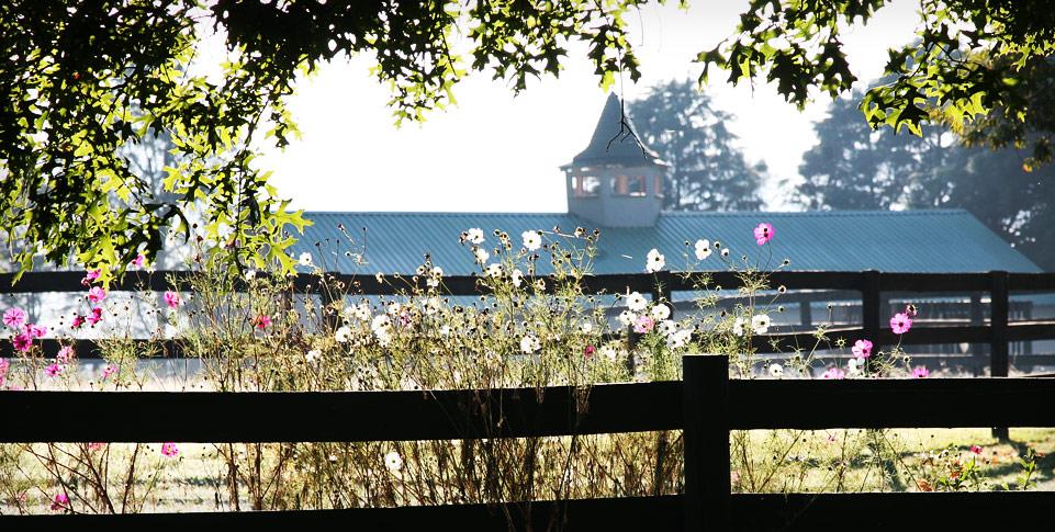 spring-water-farm-vicinity-horse-farm.jpg