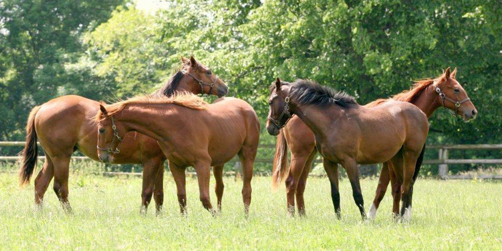 Midlands Foal Syndicate 1