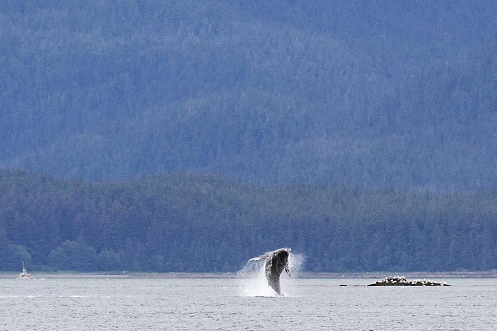 AlaskaTravelOnline_005.JPG