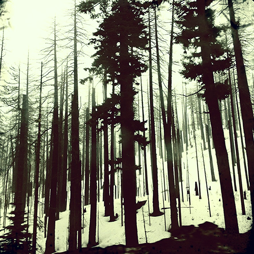 Sleeping Trees | Dalles, Oregon | 2012