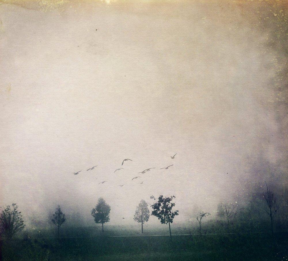 Cemetery Fog | 2015