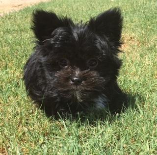Miki puppy Brady
