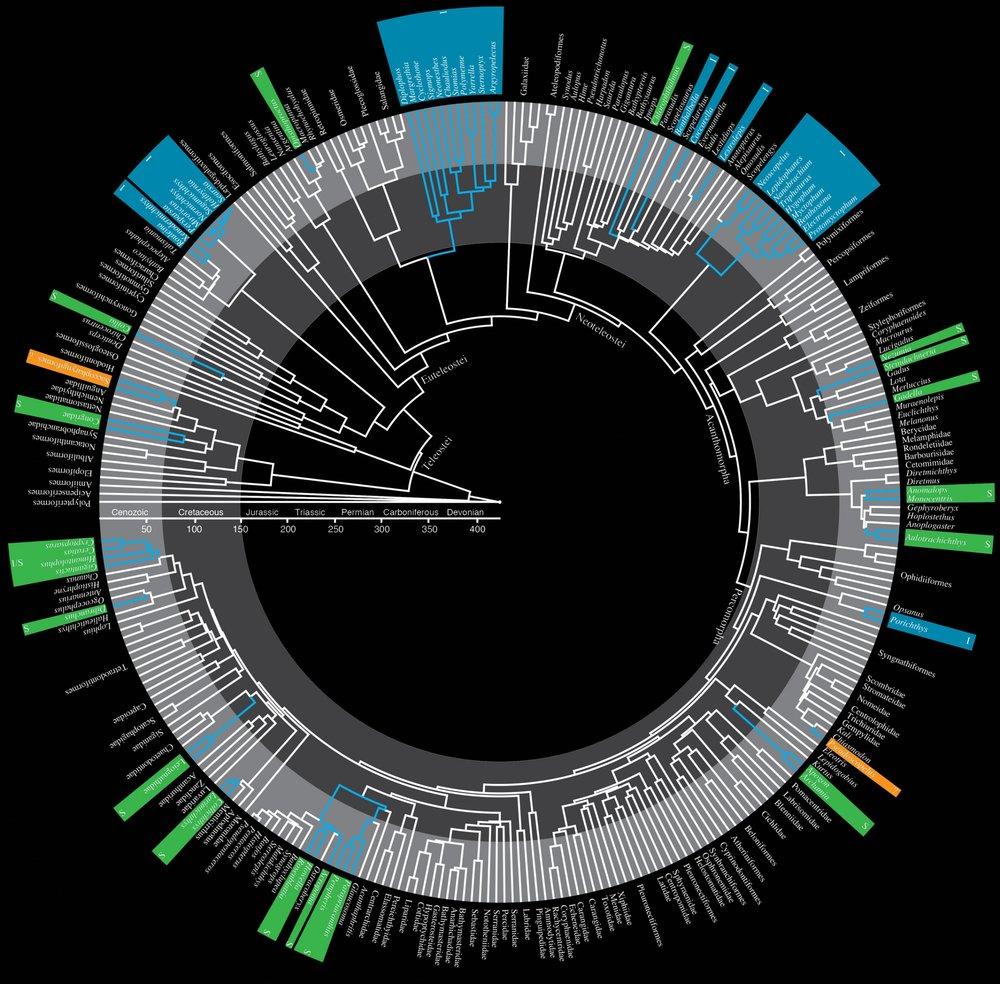 Circle_Tree_Base2.jpg