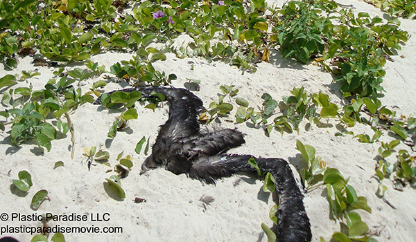 Dead-bird-on-beachJPG1.jpg