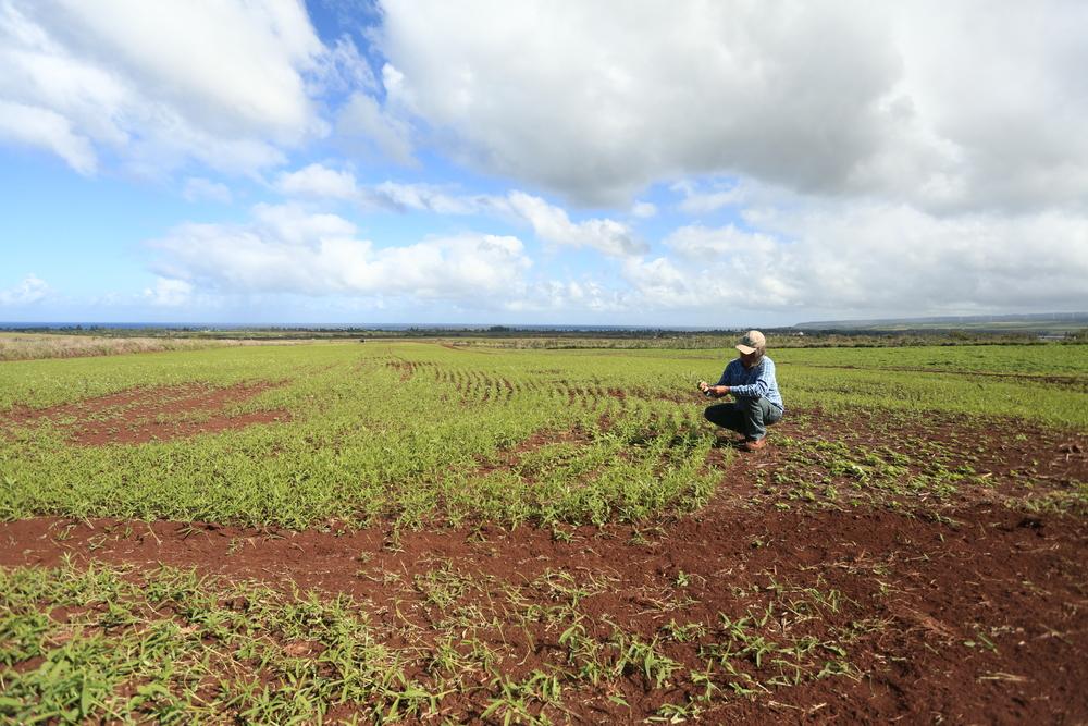 Dan Rudouy Pacific Biodiesel Biofuel crops.JPG