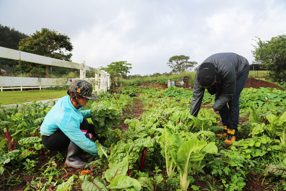 Waihueana Farm.jpg