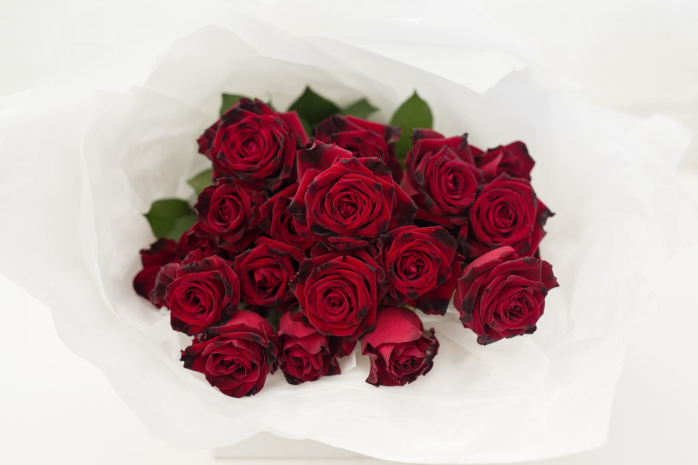 VELVET RED ROSES -   20 VELVET  50CM  STEMED RED ROSES   $70.00