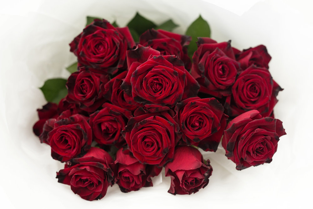 VELVET RED ROSES  - DELUXE 20 VELVET 60CM STEMED RED ROSES $120.00