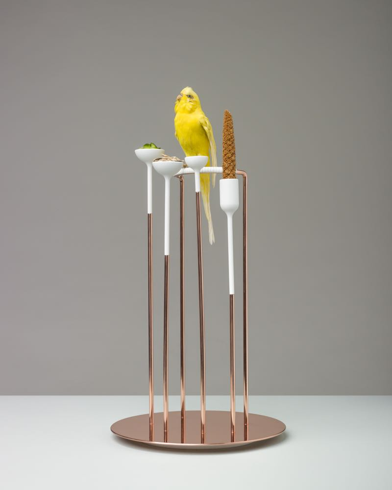 Jessica Dubochet's 'Sidekick' - Budgerigar perch. Designed to be placed on the table so the bird can share a meal in harmony with other human diners.