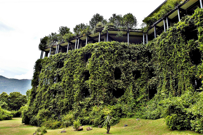 The Kandamala Hotel in Sri Lanka. The vegetation has all but taken over.