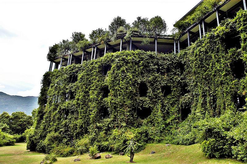 The Kandamala Hotel in Sri Lanka. The vegetation has all but taken over.