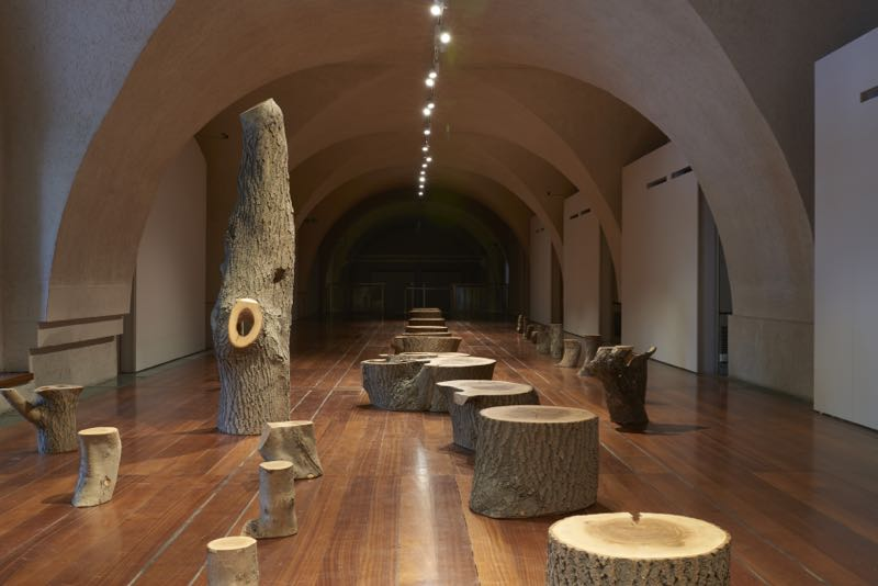 Max Lamb's 'My Grandfather's Tree' installation in the South Wing at Somerset House.