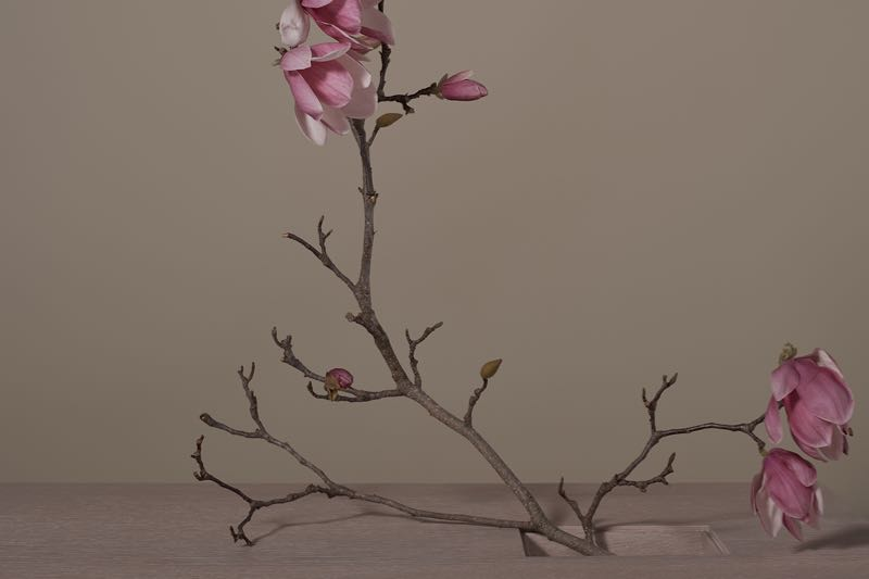 The slightly wilting beauty of a Magnolia branch added a Japanese touch to the shots of the M-coffee table.