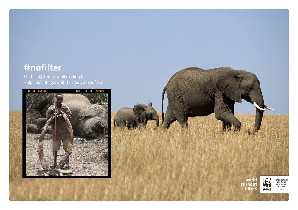 WWF3.jpg