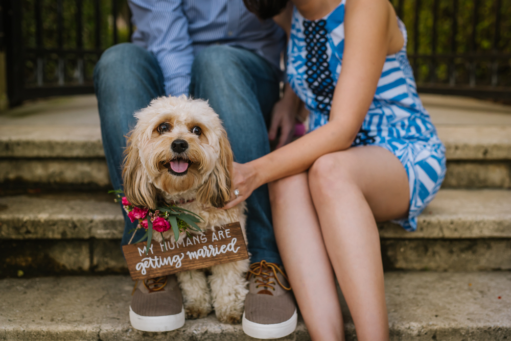 tampa-engagement-photographer-puppies-dogs-pets-my-humans-are-getting-married-family-cute
