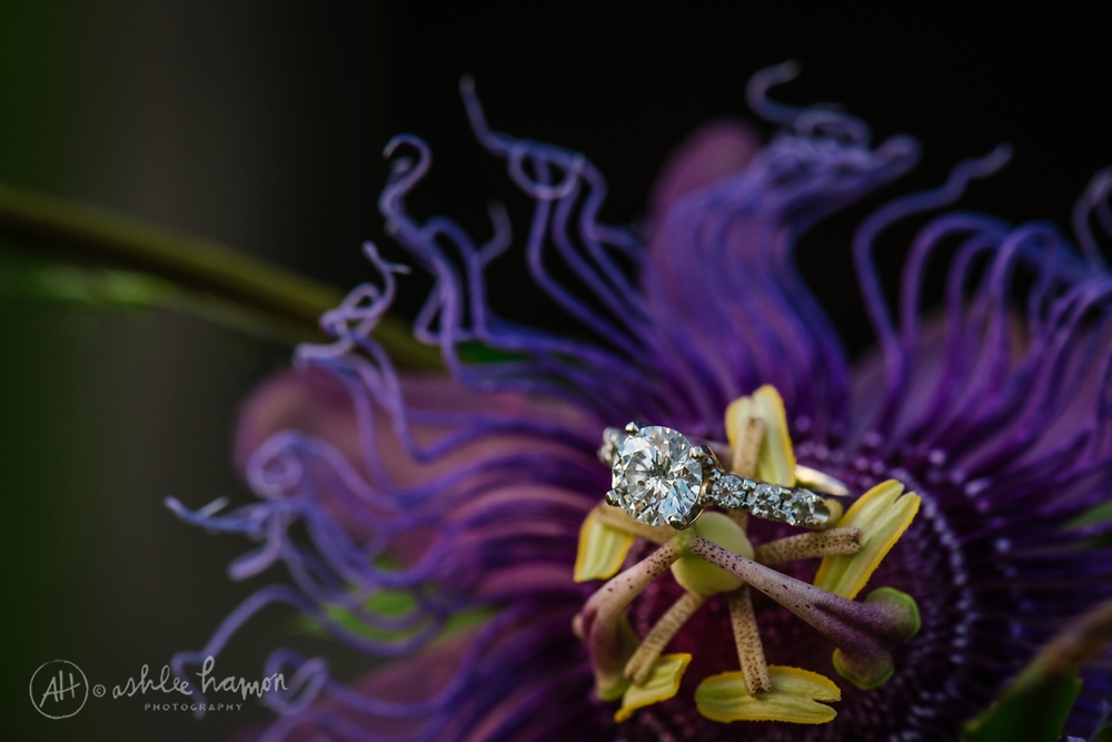 tampa-engagement-photographer-ashlee-hamon_0010.jpg