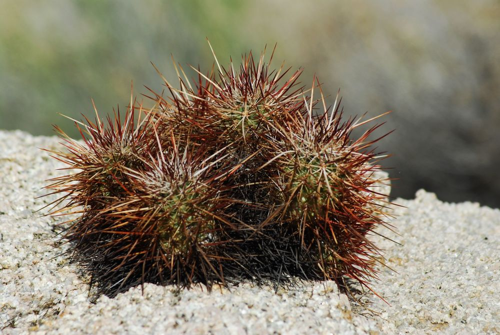 Sometimes things get a little prickly.