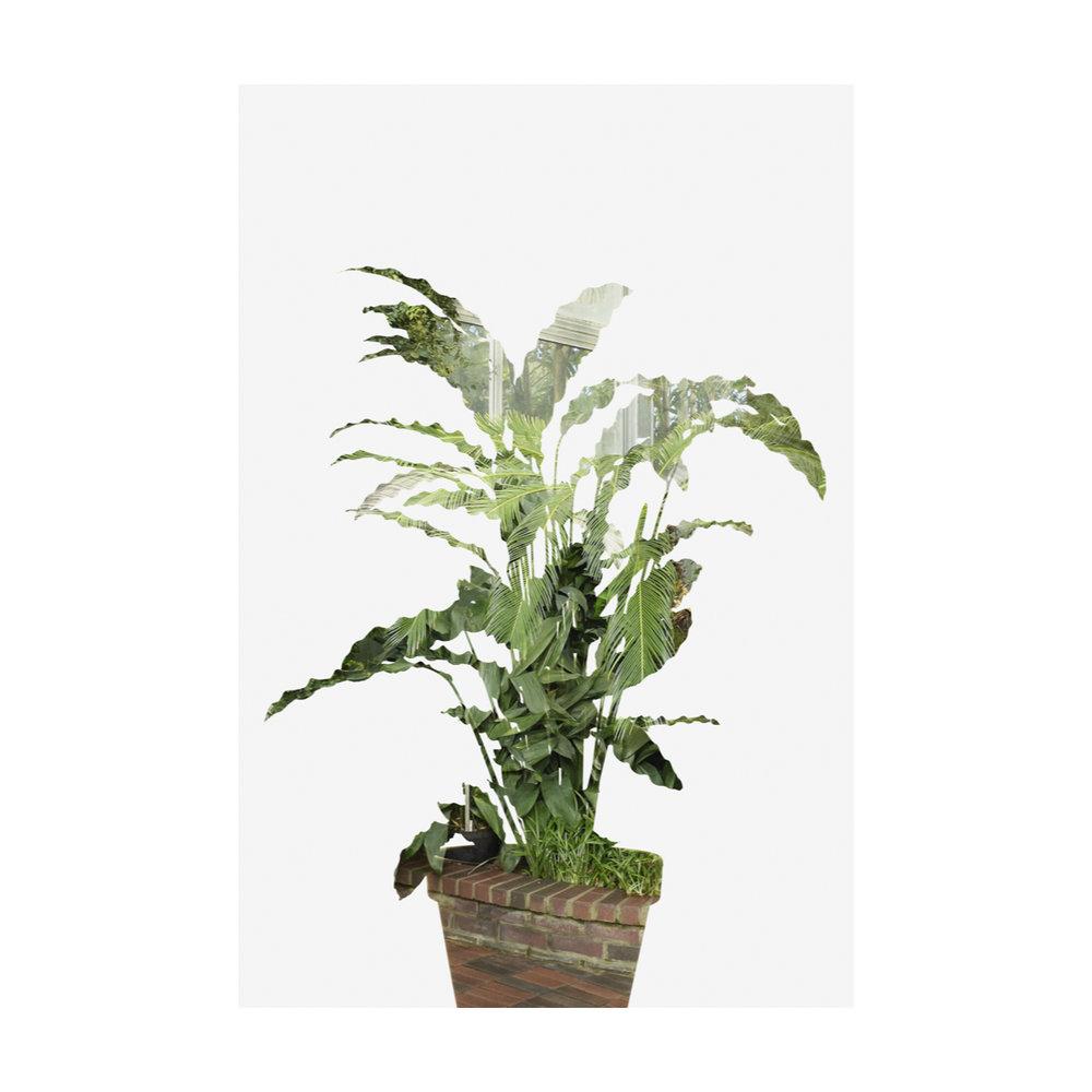 Greenhouse Houseplants-1.jpg