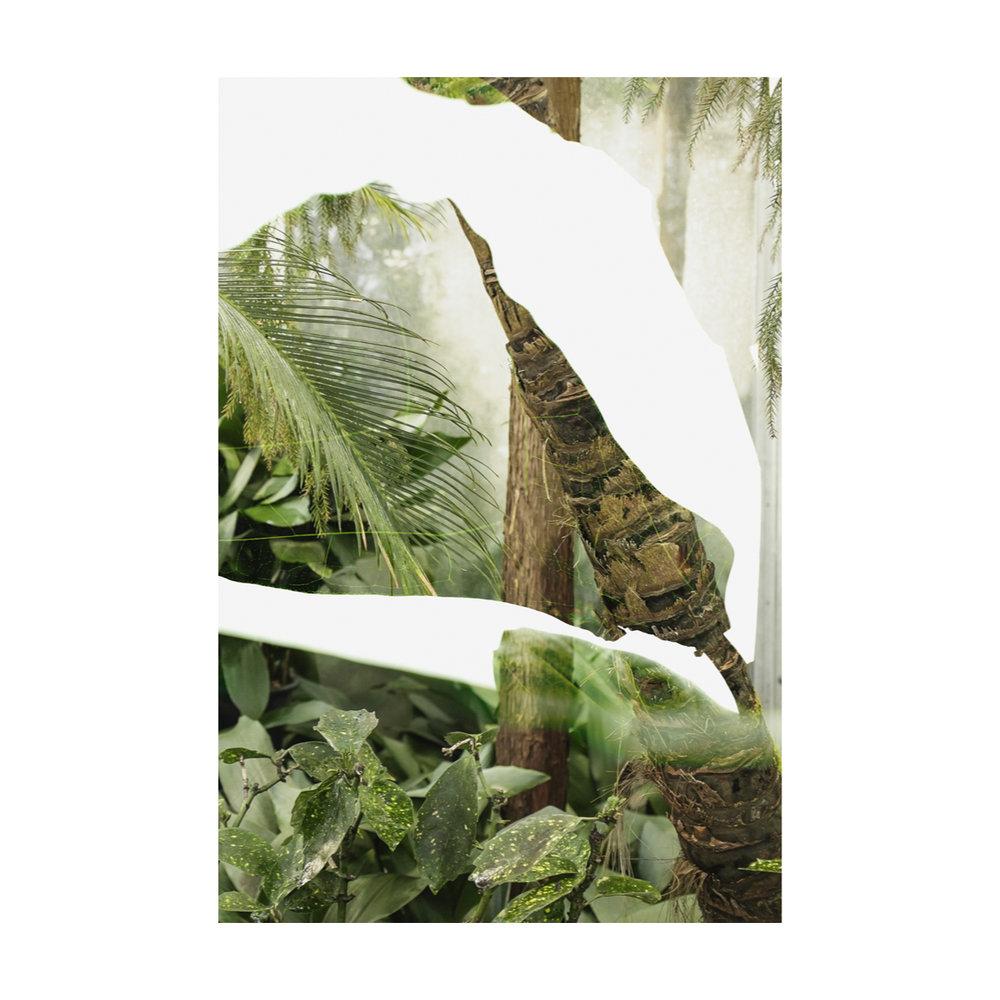 Greenhouse Houseplants-2.jpg