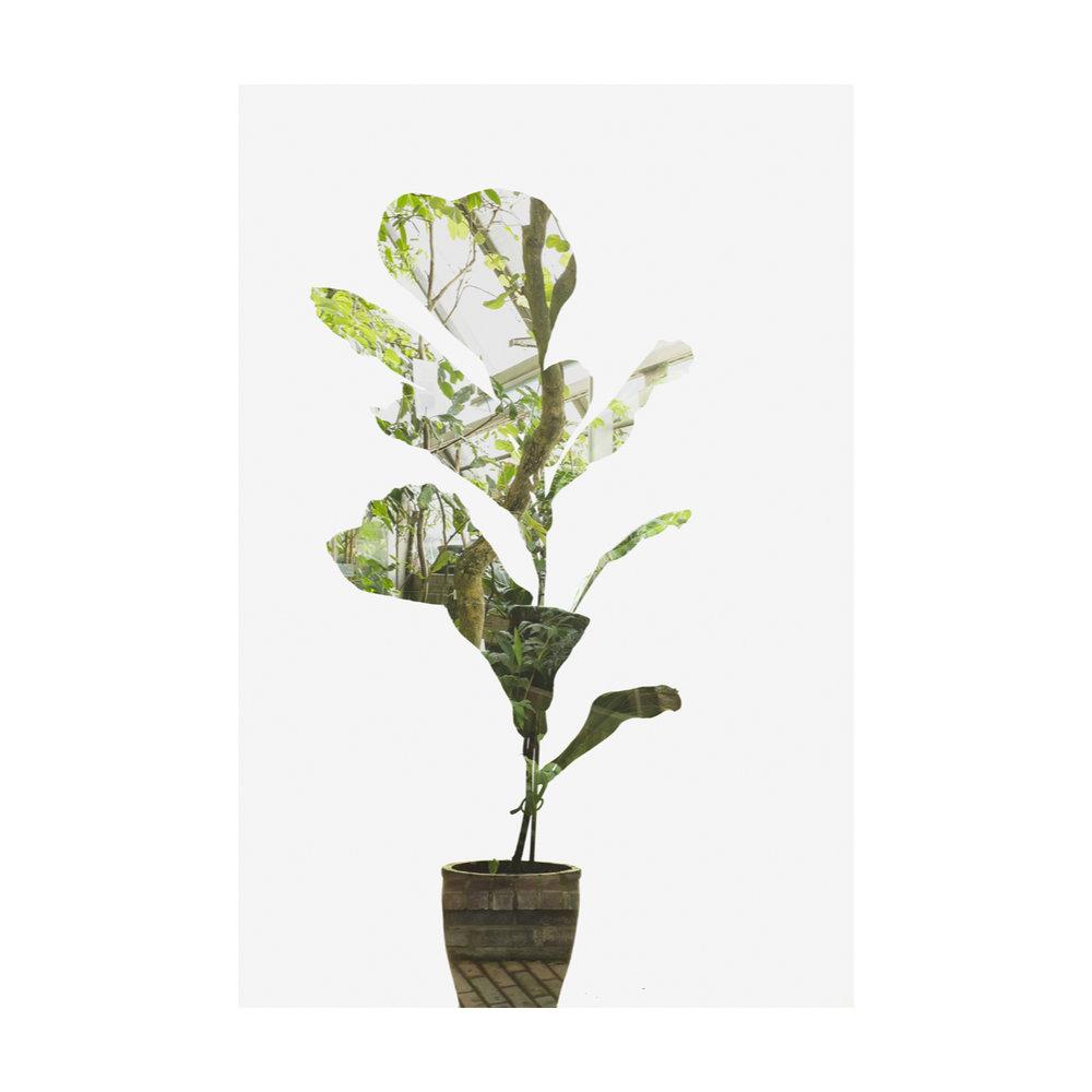 Greenhouse Houseplants-3.jpg