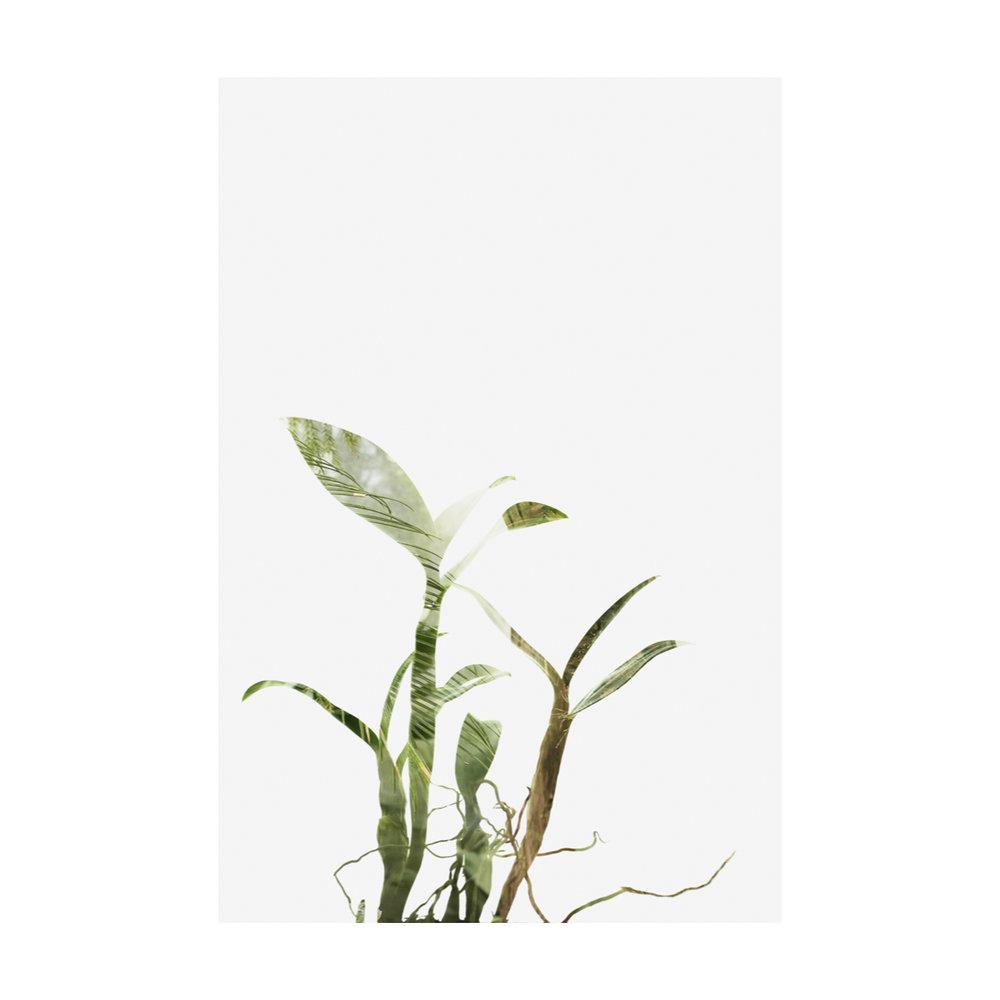 Greenhouse Houseplants-5.jpg