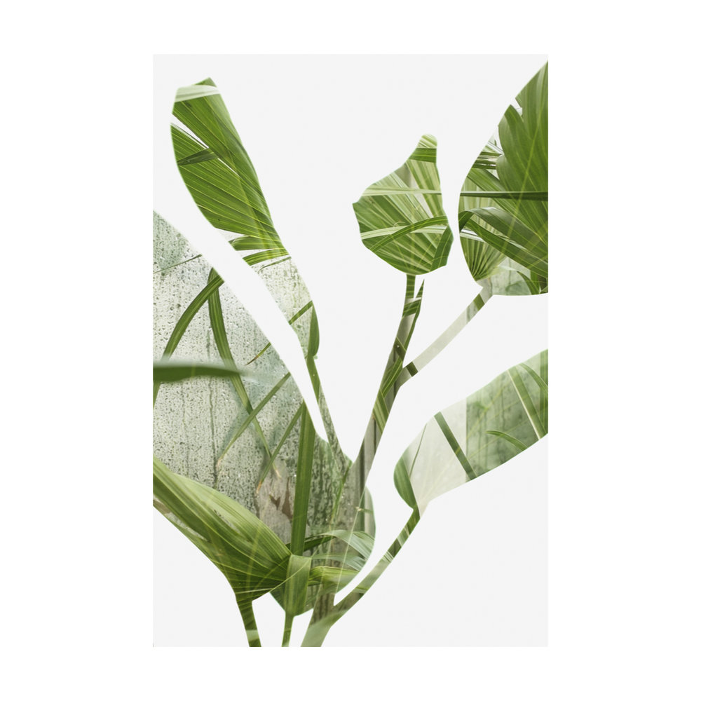 Greenhouse Houseplants-4.jpg