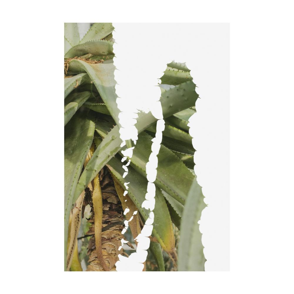 Greenhouse Houseplants-6.jpg