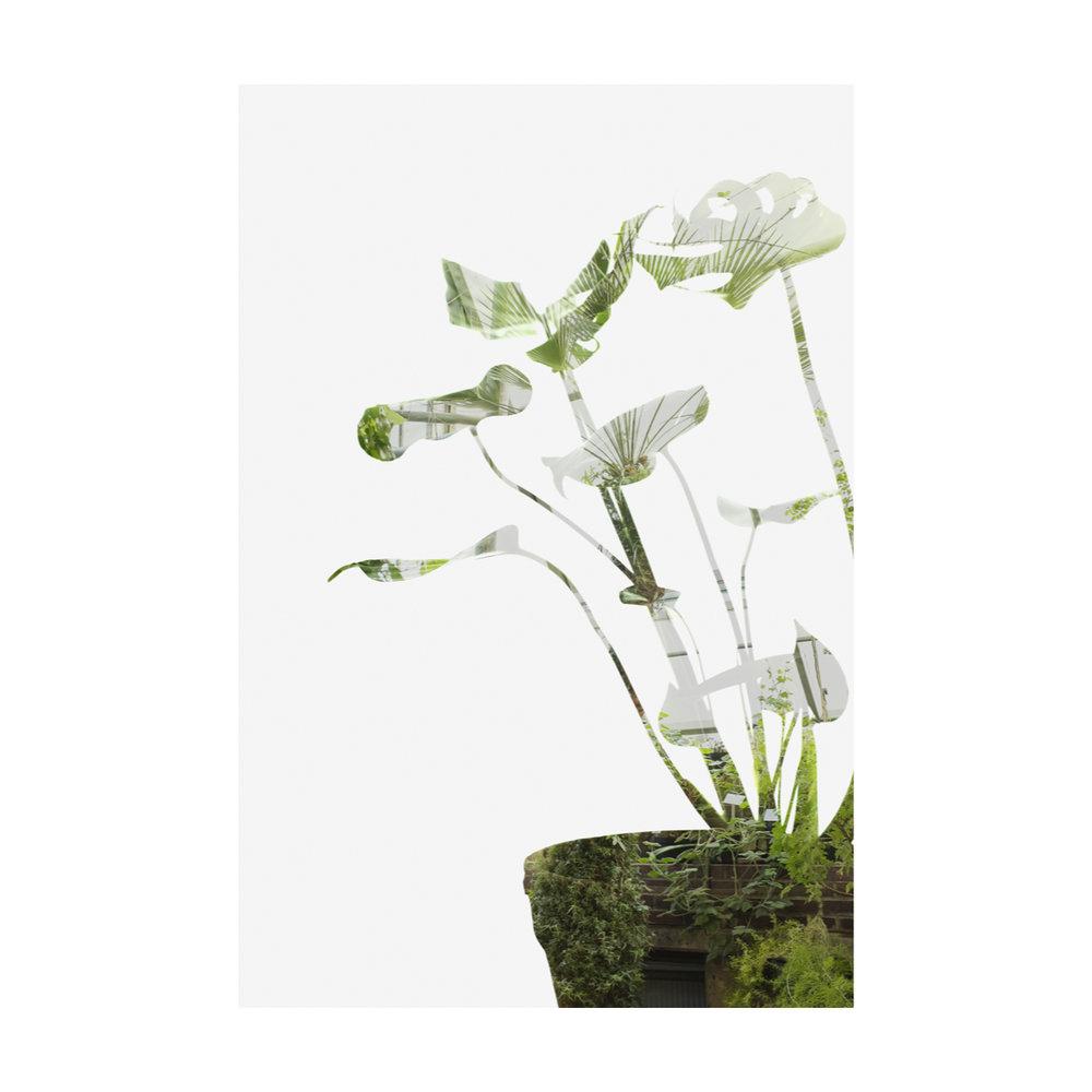 Greenhouse Houseplants-7.jpg