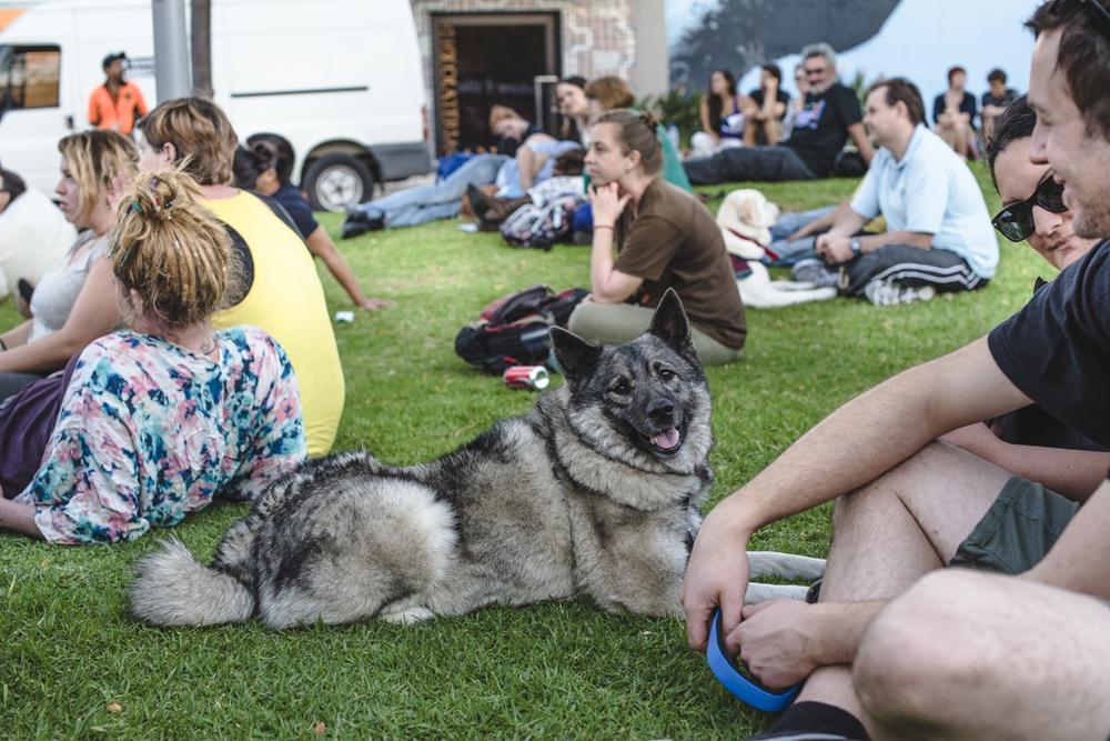 Web_The Good Dog Festival-5804-33.jpg
