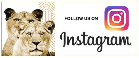 LOA-Instagram.png