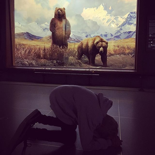 Fear the bear - The American Museum of Natural History #amnh #bear #nyc