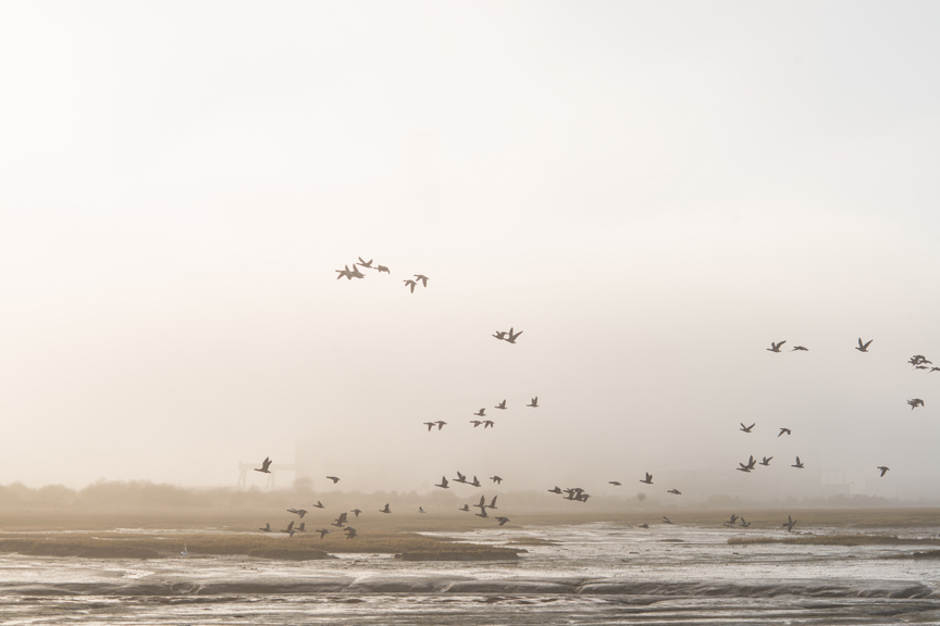 birds_calshot.jpg