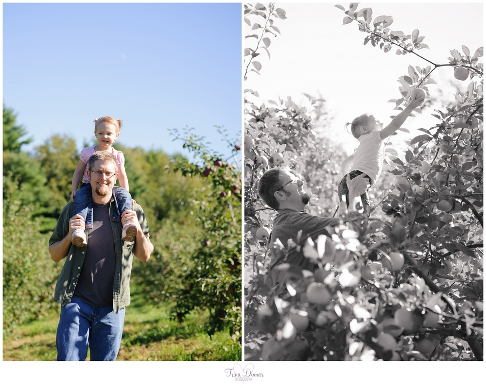 Apple Picking Maine Photography